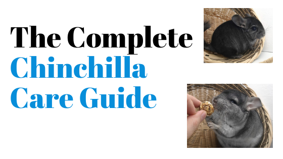 The Complete Chinchilla Care Guide