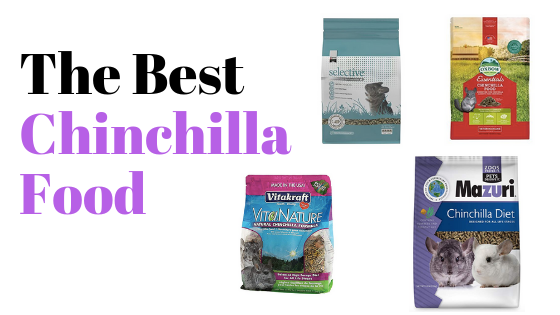 Best-Chinchilla-Food