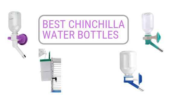 Best-Chinchilla-Water-Bottle