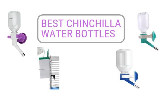 Best-Chinchilla-Water-Bottle