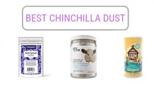 best-chinchilla-dust