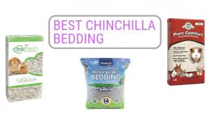 Best-Chinchilla-Bedding