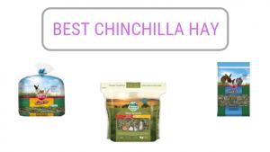 Best-Chinchilla-Hay