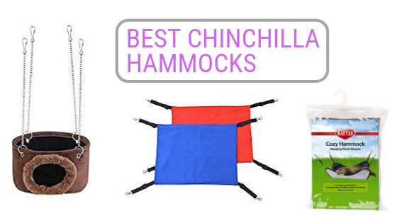 best chinchilla hammocks
