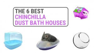 Best Chinchilla Dust Bath Houses