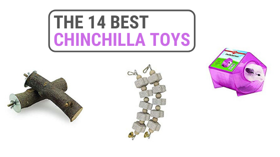 Best Chinchilla Toys